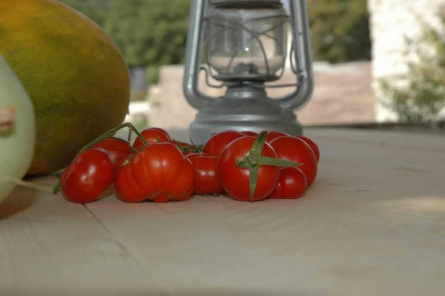 freshly picked red tomatoes form the farmhouse croft
