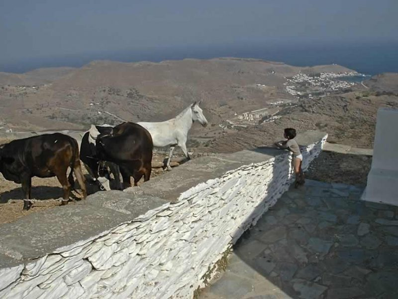 Local goats enjoying the view to the Aegean