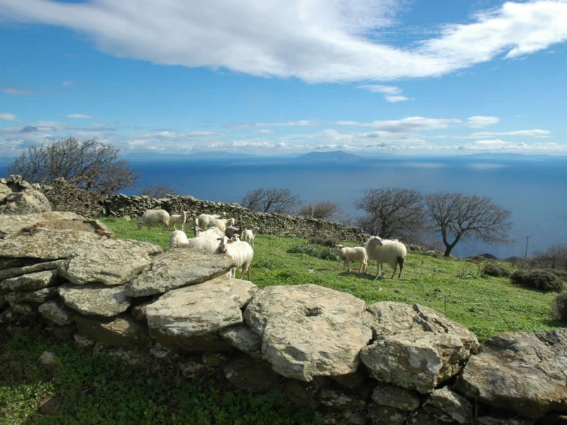 Explore the island's local topography with its' ancient walking routes and enjoy the distinctive architecture which is the work of human hands and toil. As one penetrates into the island he/she begins to discover the special charm of its physical and cultural personality. Monasteries and old country churches, significant archaelogical sites and museum, fountain houses, water mills and wind mills. Stables and farmhouses, agricultural households, beekepers and owners of small livestock. Welcome to Kea in the Cyclades!